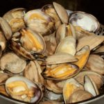 Steamed Aqua Little Necks Clams